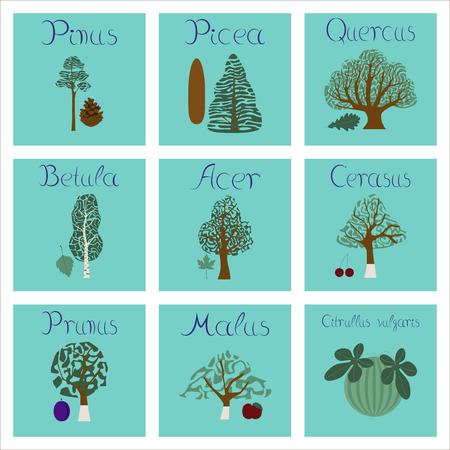 quercus: assembly of flat Illustrations Pinus Picea Quercus Betula Citrullus Malus Prunus Cerasus Citrullus Populus