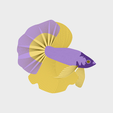 Vector illustration in flat style rooster fish Illustration