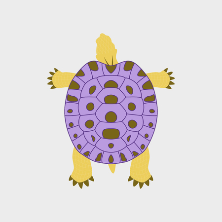 Vector illustration in flat style turtle