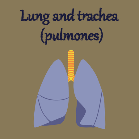 trachea: human organ icon in flat style lungs and trachea Illustration