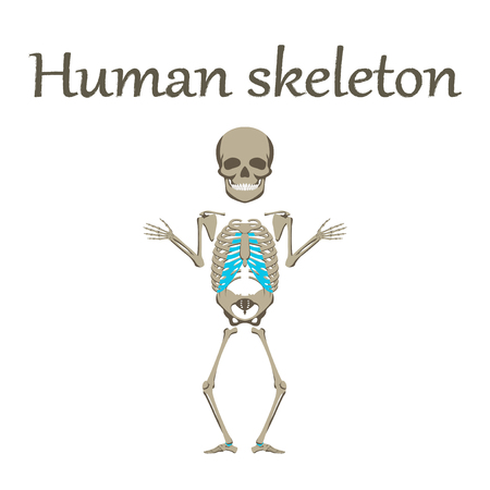 human organ icon in flat style human skeleton