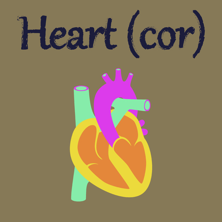 right atrium: human organ icon in flat style heart Illustration
