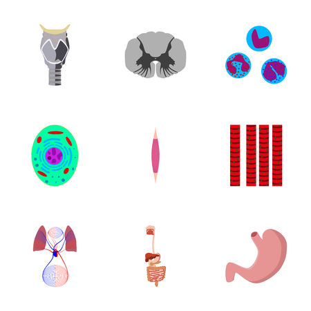 leukocyte: icons set in flat style human biology Illustration