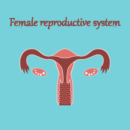 sistema reproductor femenino: human organ icon in flat style female reproductive system Vectores