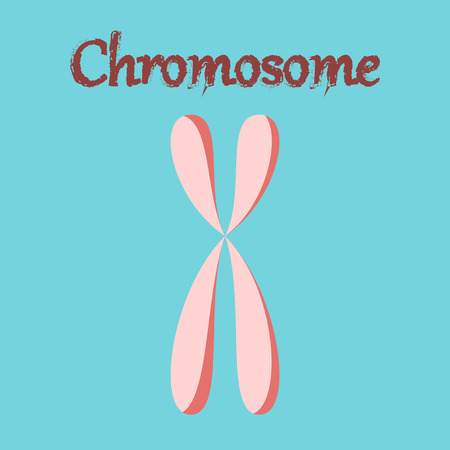 human organ icon in flat style chromosome