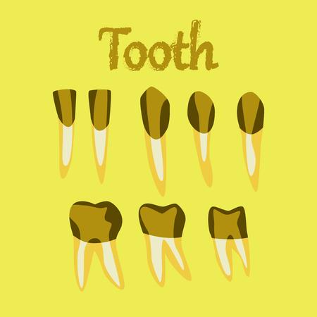incisor: human organ icon in flat style tooth