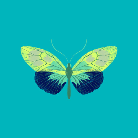 chitin: Flat shading style icon butterfly Illustration