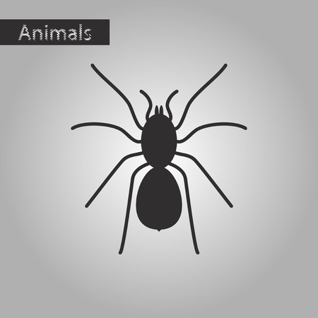 Black and white style icon of tarantula Illustration