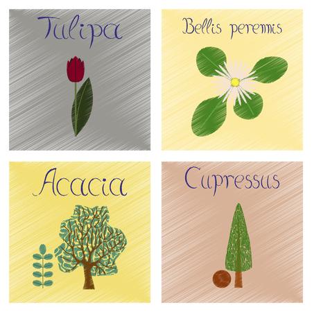 assembly flat shading style Illustrations Cupressus Acacia Bellis Tulipa