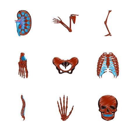 assembly of flat shading style icon human bones