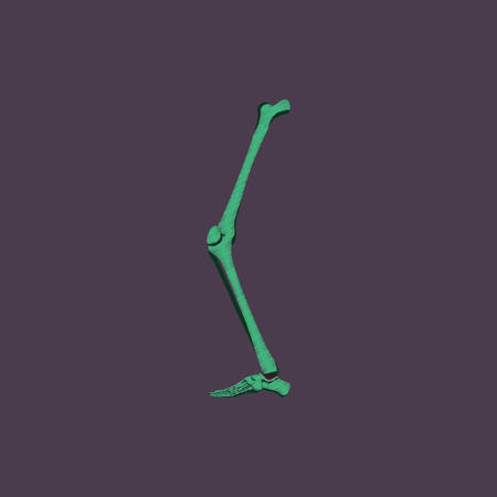 phalanges: flat shading style icon leg bone Illustration