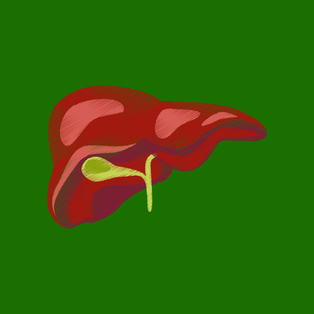 flat shading style icon liver Illustration