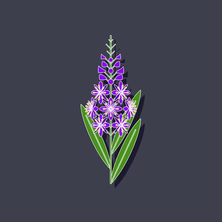 angustifolium: paper sticker on stylish background herbal Chamerion