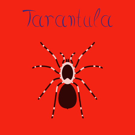 Flat illustration on background spider tarantula