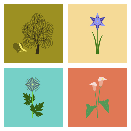 assembly flat Illustrations flower calla aster narcissus linden