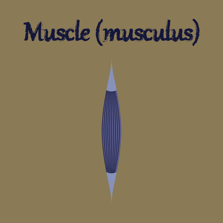 control of body movement: human organ icon in flat style muscle