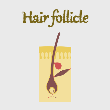 human organ icon in flat style hair follicles Illustration