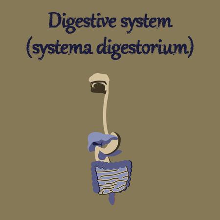 pharynx: human organ icon in flat style digestive system