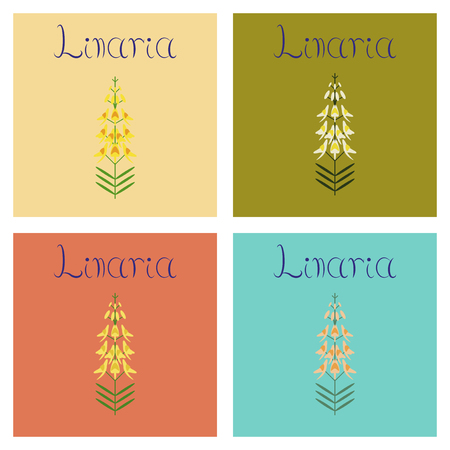 assembly flat Illustrations herb Linaria