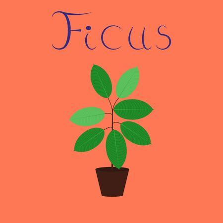 flat illustration on background plant Ficus