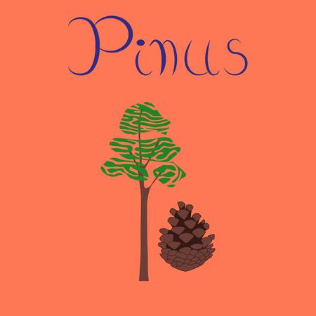 flat illustration on stylish background plant Pinus