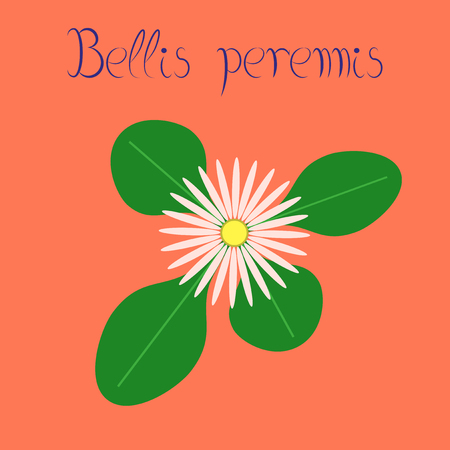 flat illustration on stylish background plant Bellis