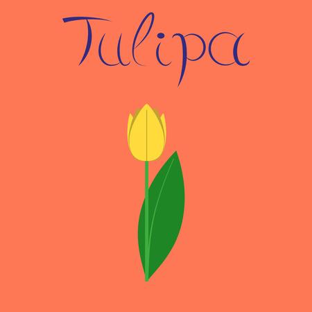 flat illustration on stylish background plant Tulipa