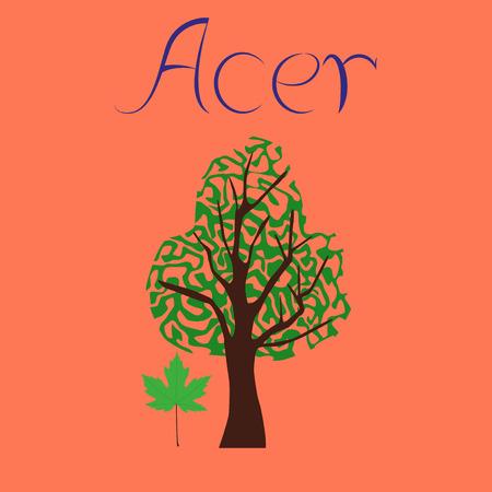 flat illustration stylish background plant Acer