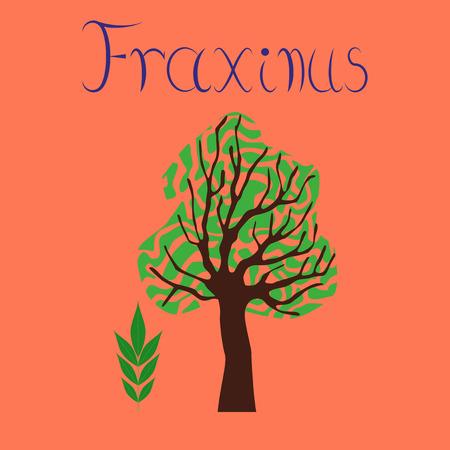 flat illustration stylish background plant Fraxinus