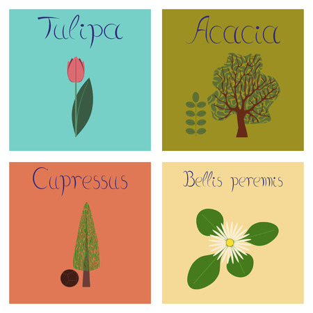 assembly flat Illustrations nature Cupressus Acacia Bellis Tulipa