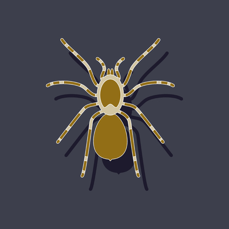 paper sticker on background of tarantula