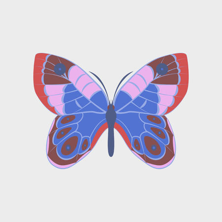 Colorful icon of butterfly isolated on white