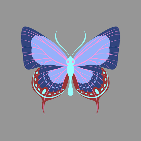 Colorful icon of butterfly isolated on gray Illustration