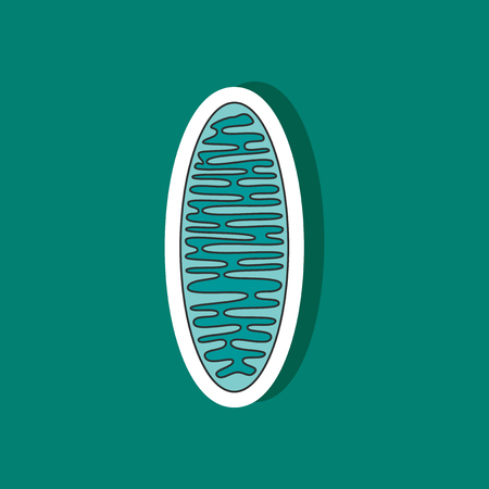 Mitochondrion paper sticker on stylish background Stock Vector - 79984370