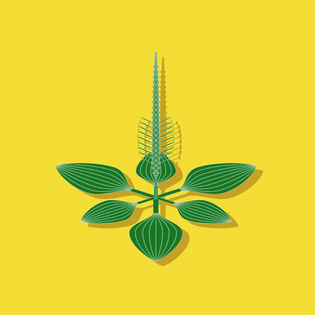 paper sticker on stylish background plant Plantago