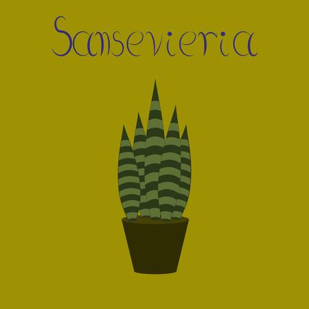 flat illustration stylish background plant Sansevieria