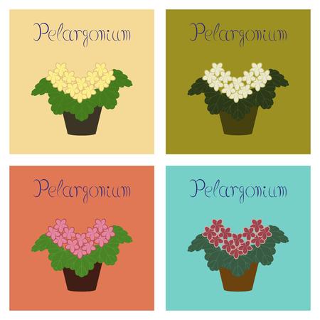 assembly flat Illustrations plant Pelargonium