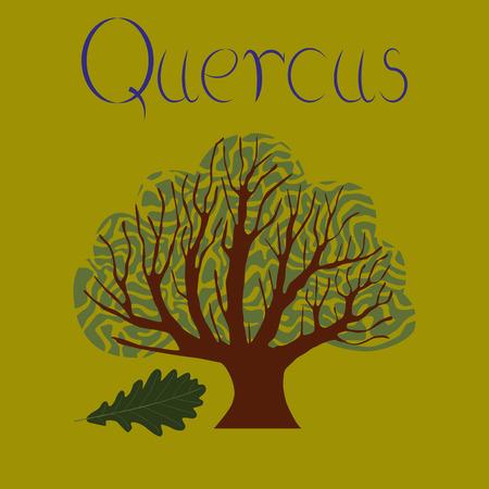 flat illustration stylish background plant Quercus