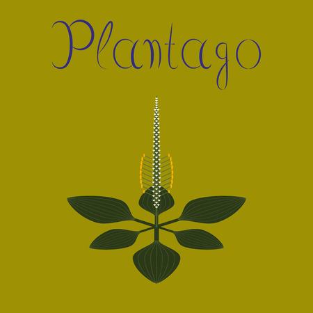 flat illustration on background plant Plantago