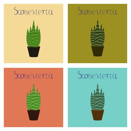 assembly flat Illustrations plant Sansevieria