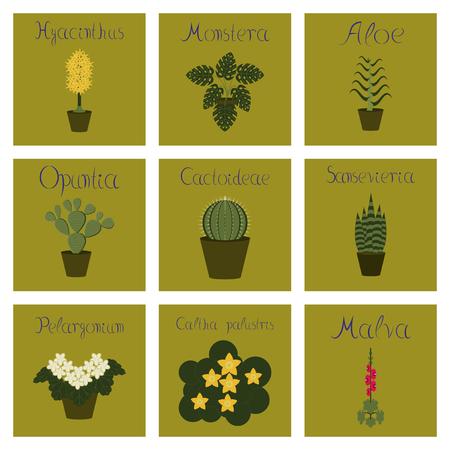 assembly flat Illustrations Arctium Malva Caltha Pelargonium Hyacinthus Monstera Opuntia Cactoideae Aloe