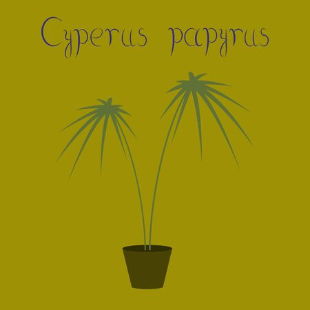 flat illustration on background plant Cyperus