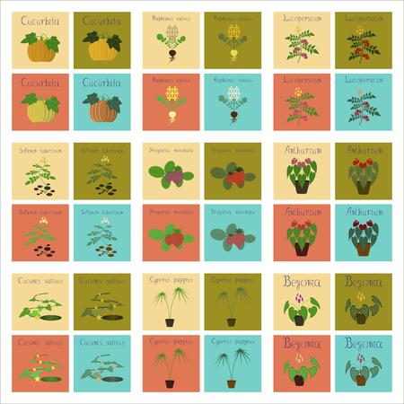 フラット イラスト カボチャ ダイコン トマト ナス カヤツリグサ フィカス キュウリ アンスリウム イチゴ ベゴニアのアセンブリ  イラスト・ベクター素材