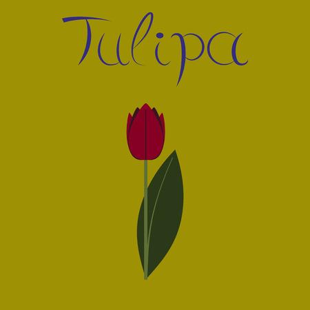 flat illustration stylish background plant Tulipa Illustration