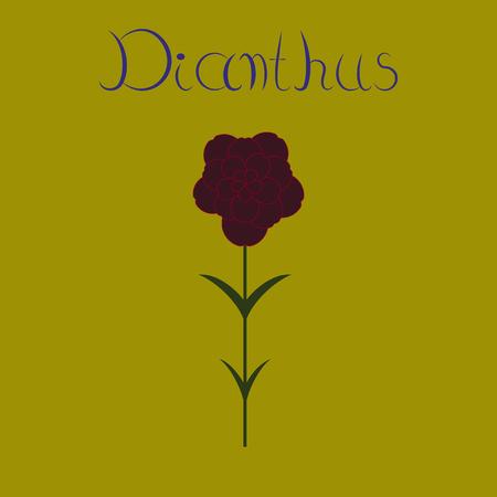 flat illustration stylish background plant Dianthus Illustration