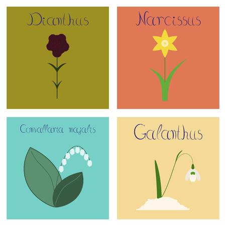 assembly flat Illustrations nature Convallaria Narcissus Dianthus Galanthus