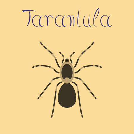 flat illustration on background spider tarantula