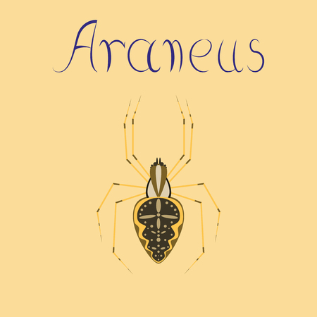 flat illustration on background spider Araneus