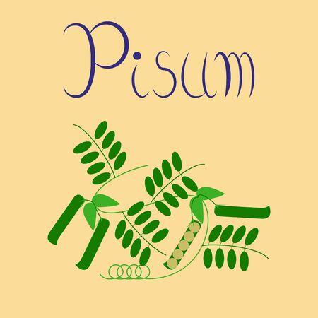 flat illustration on background natural pisum