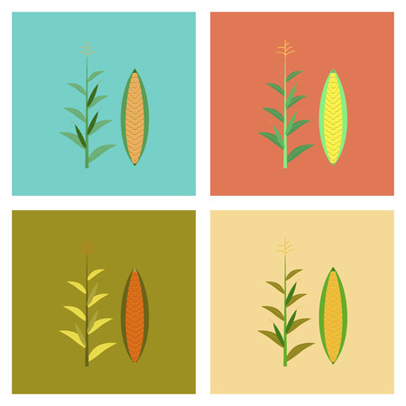 zea: assembly flat Illustrations zea mays Illustration